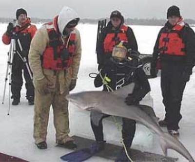 Bull Shark Caught In Lake Pepin