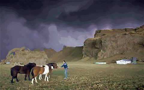 Icelandic Horses Ride Out The Ash Storm